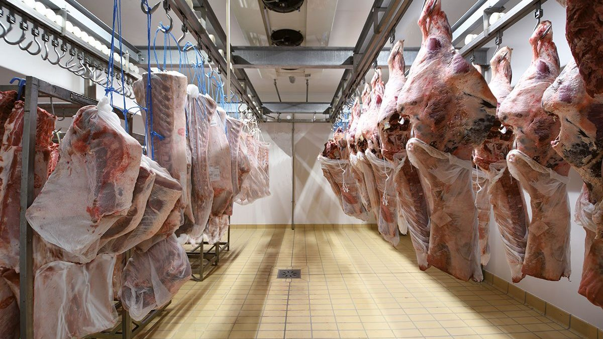 Short hanging to mature and dry aged cold rooms
